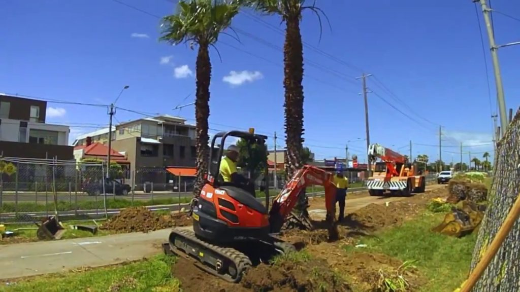 Palm Tree Removal-Tamiami FL Tree Trimming and Stump Grinding Services-We Offer Tree Trimming Services, Tree Removal, Tree Pruning, Tree Cutting, Residential and Commercial Tree Trimming Services, Storm Damage, Emergency Tree Removal, Land Clearing, Tree Companies, Tree Care Service, Stump Grinding, and we're the Best Tree Trimming Company Near You Guaranteed!