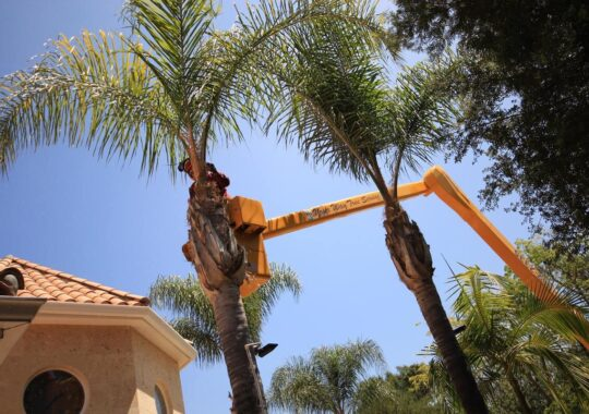 Palm Tree Trimming-Tamiami FL Tree Trimming and Stump Grinding Services-We Offer Tree Trimming Services, Tree Removal, Tree Pruning, Tree Cutting, Residential and Commercial Tree Trimming Services, Storm Damage, Emergency Tree Removal, Land Clearing, Tree Companies, Tree Care Service, Stump Grinding, and we're the Best Tree Trimming Company Near You Guaranteed!