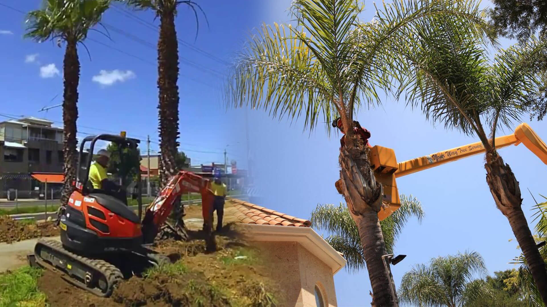 Palm tree trimming & palm tree removal-Tamiami FL Tree Trimming and Stump Grinding Services-We Offer Tree Trimming Services, Tree Removal, Tree Pruning, Tree Cutting, Residential and Commercial Tree Trimming Services, Storm Damage, Emergency Tree Removal, Land Clearing, Tree Companies, Tree Care Service, Stump Grinding, and we're the Best Tree Trimming Company Near You Guaranteed!