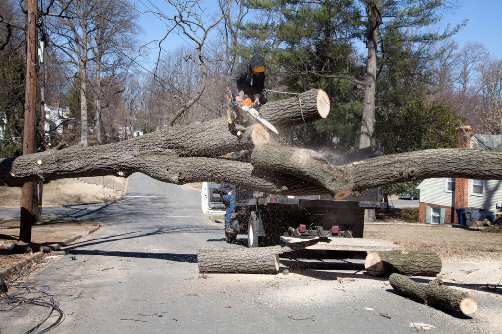 Residential Tree Services-Tamiami FL Tree Trimming and Stump Grinding Services-We Offer Tree Trimming Services, Tree Removal, Tree Pruning, Tree Cutting, Residential and Commercial Tree Trimming Services, Storm Damage, Emergency Tree Removal, Land Clearing, Tree Companies, Tree Care Service, Stump Grinding, and we're the Best Tree Trimming Company Near You Guaranteed!