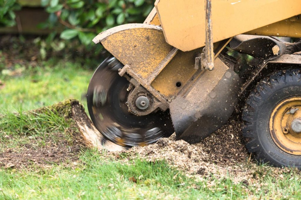 Stump Grinding-Tamiami FL Tree Trimming and Stump Grinding Services-We Offer Tree Trimming Services, Tree Removal, Tree Pruning, Tree Cutting, Residential and Commercial Tree Trimming Services, Storm Damage, Emergency Tree Removal, Land Clearing, Tree Companies, Tree Care Service, Stump Grinding, and we're the Best Tree Trimming Company Near You Guaranteed!