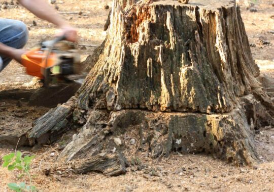 Stump Removal-Tamiami FL Tree Trimming and Stump Grinding Services-We Offer Tree Trimming Services, Tree Removal, Tree Pruning, Tree Cutting, Residential and Commercial Tree Trimming Services, Storm Damage, Emergency Tree Removal, Land Clearing, Tree Companies, Tree Care Service, Stump Grinding, and we're the Best Tree Trimming Company Near You Guaranteed!