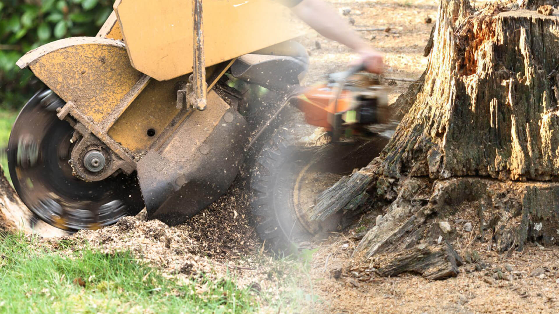 Stump grinding & removal-Tamiami FL Tree Trimming and Stump Grinding Services-We Offer Tree Trimming Services, Tree Removal, Tree Pruning, Tree Cutting, Residential and Commercial Tree Trimming Services, Storm Damage, Emergency Tree Removal, Land Clearing, Tree Companies, Tree Care Service, Stump Grinding, and we're the Best Tree Trimming Company Near You Guaranteed!