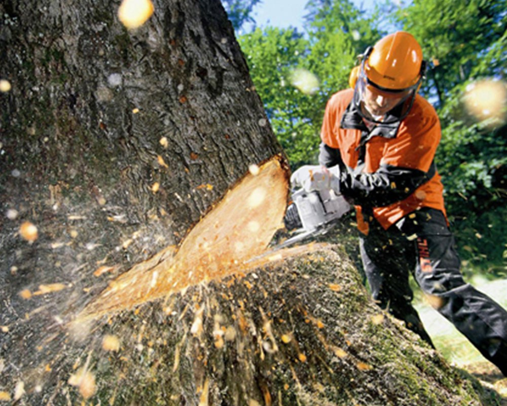 Tree Cutting-Tamiami FL Tree Trimming and Stump Grinding Services-We Offer Tree Trimming Services, Tree Removal, Tree Pruning, Tree Cutting, Residential and Commercial Tree Trimming Services, Storm Damage, Emergency Tree Removal, Land Clearing, Tree Companies, Tree Care Service, Stump Grinding, and we're the Best Tree Trimming Company Near You Guaranteed!