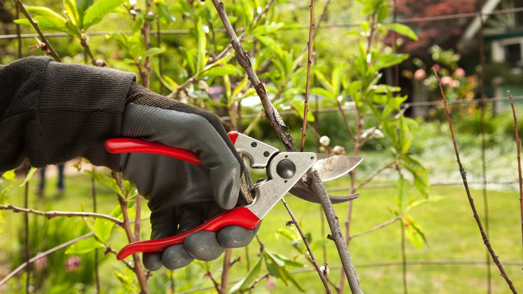 Tree Pruning-Tamiami FL Tree Trimming and Stump Grinding Services-We Offer Tree Trimming Services, Tree Removal, Tree Pruning, Tree Cutting, Residential and Commercial Tree Trimming Services, Storm Damage, Emergency Tree Removal, Land Clearing, Tree Companies, Tree Care Service, Stump Grinding, and we're the Best Tree Trimming Company Near You Guaranteed!
