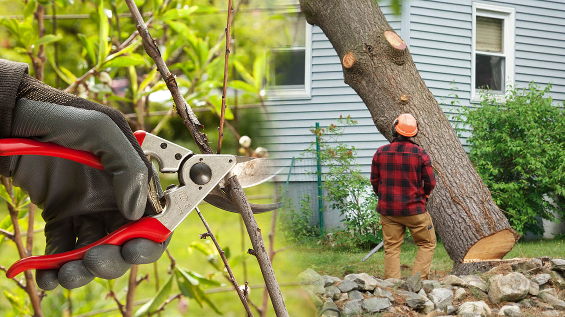 Tree pruning & tree removal-Tamiami FL Tree Trimming and Stump Grinding Services-We Offer Tree Trimming Services, Tree Removal, Tree Pruning, Tree Cutting, Residential and Commercial Tree Trimming Services, Storm Damage, Emergency Tree Removal, Land Clearing, Tree Companies, Tree Care Service, Stump Grinding, and we're the Best Tree Trimming Company Near You Guaranteed!